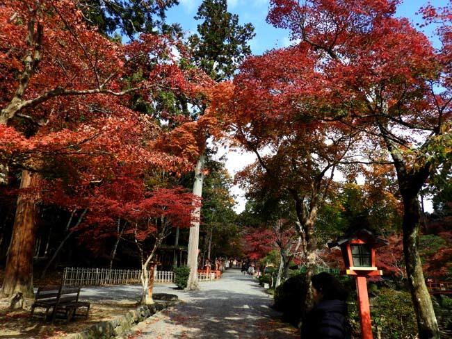 大原野神社 盛り_e0048413_21474881.jpg