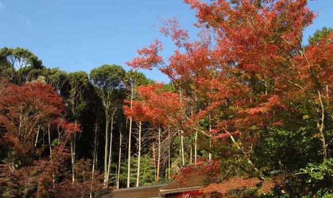 大原野神社 盛り_e0048413_21534077.jpg