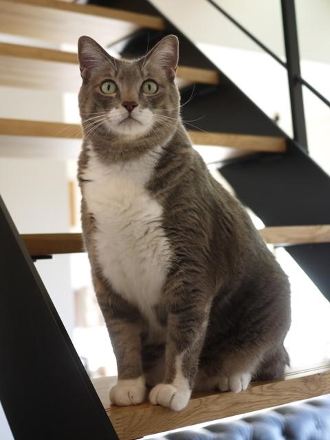 猫のお留守番 あーるくん編。_a0143140_20230395.jpg