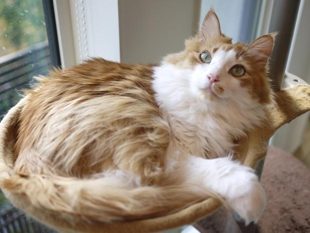 猫のお留守番 もんてぃくん編。_a0143140_20335382.jpg