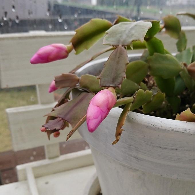 ++小さな命&植木鉢の冬支度*++_e0354456_09442895.jpg
