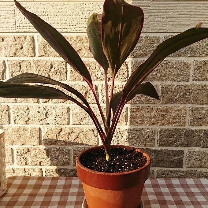 ++小さな命&植木鉢の冬支度*++_e0354456_09450652.jpg