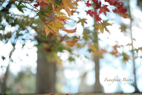 秋の風情 **_d0344864_21381402.jpg