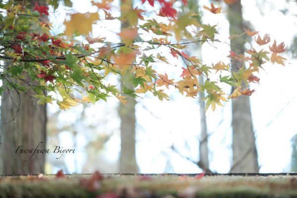 秋の風情 **_d0344864_21381941.jpg