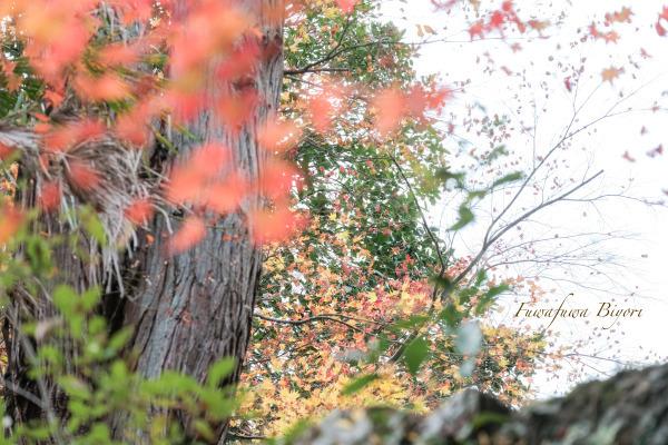 秋の風情 **_d0344864_21382414.jpg