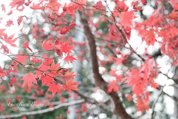 秋の風情 **_d0344864_21383056.jpg