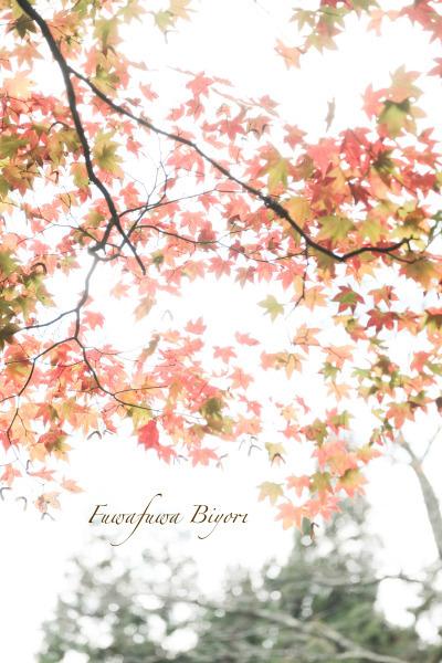 秋の風情 **_d0344864_21383693.jpg