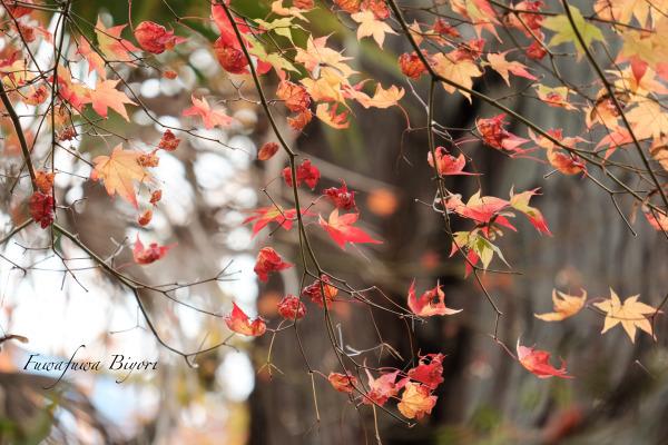 秋の風情 **_d0344864_21384115.jpg