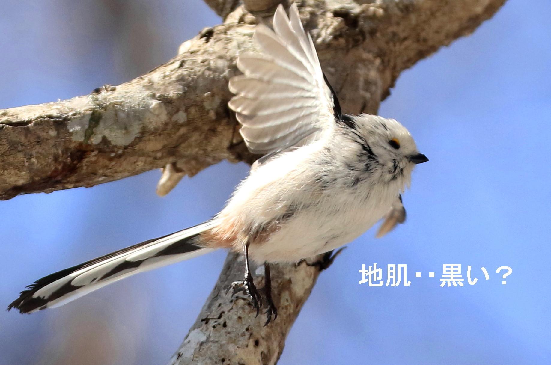 白い鳥と・・シロクマ^^_c0229170_21225935.jpg