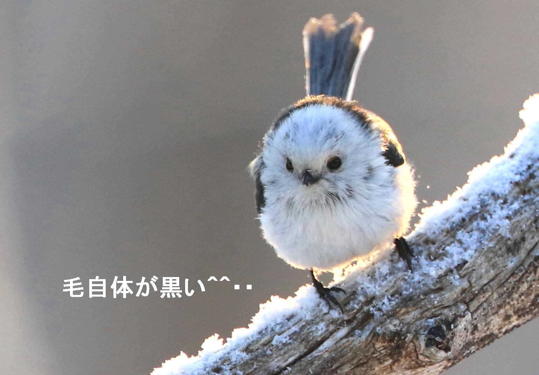 白い鳥と・・シロクマ^^_c0229170_21231662.jpg
