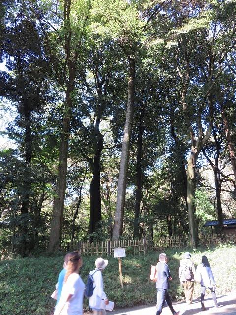 「代々木」の由来となった樅の木  (原宿散歩⑤) _c0187004_14492253.jpg