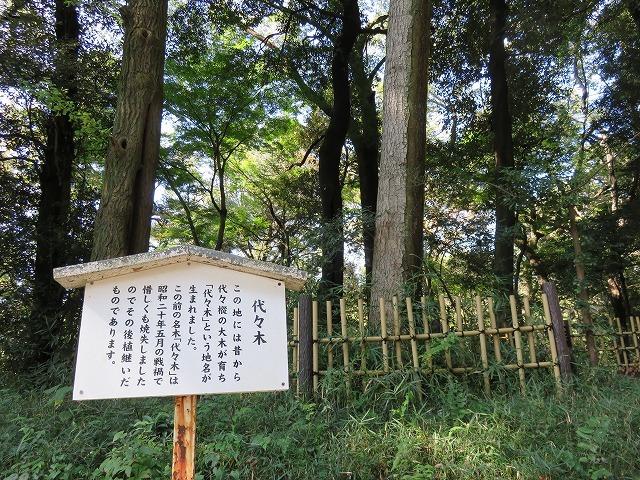 「代々木」の由来となった樅の木  (原宿散歩⑤) _c0187004_14492723.jpg