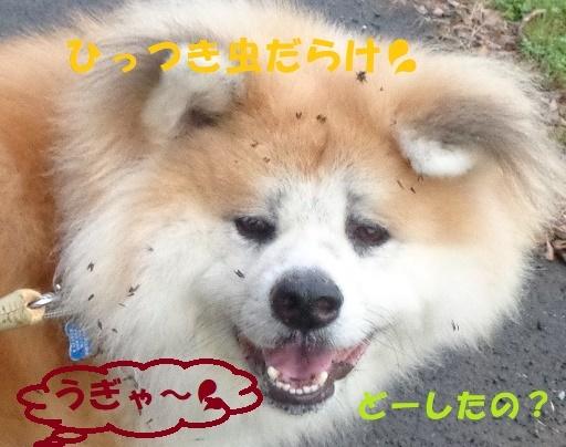 f0121712_00261251.jpg