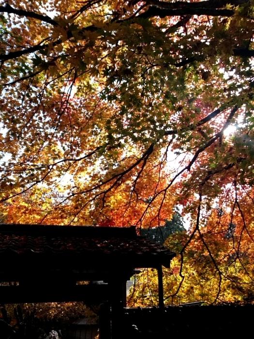 幸せ京都旅 「常照皇寺」 静寂なる禅寺の美しき紅葉_c0362623_15454842.jpg