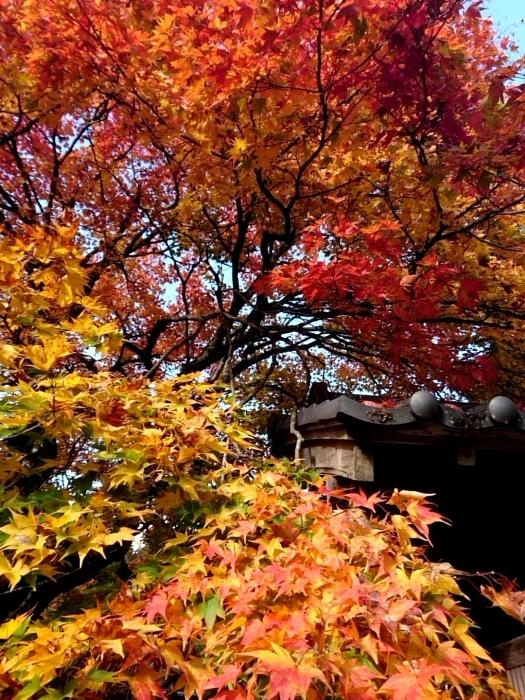 幸せ京都旅 「常照皇寺」 静寂なる禅寺の美しき紅葉_c0362623_15455007.jpg
