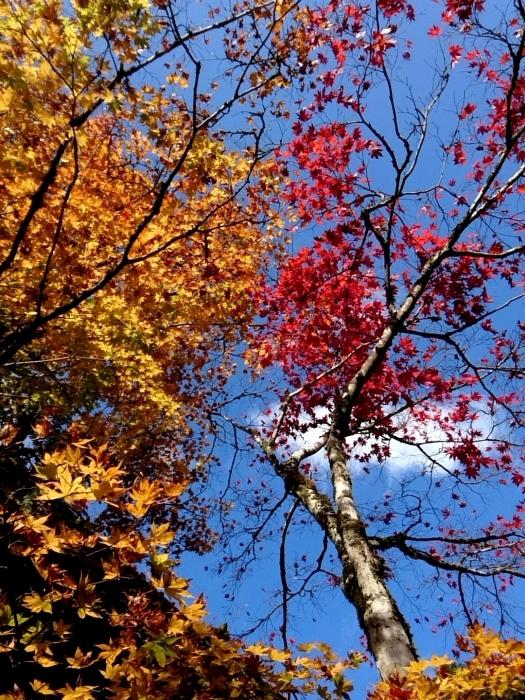 幸せ京都旅 「常照皇寺」 静寂なる禅寺の美しき紅葉_c0362623_15455158.jpg