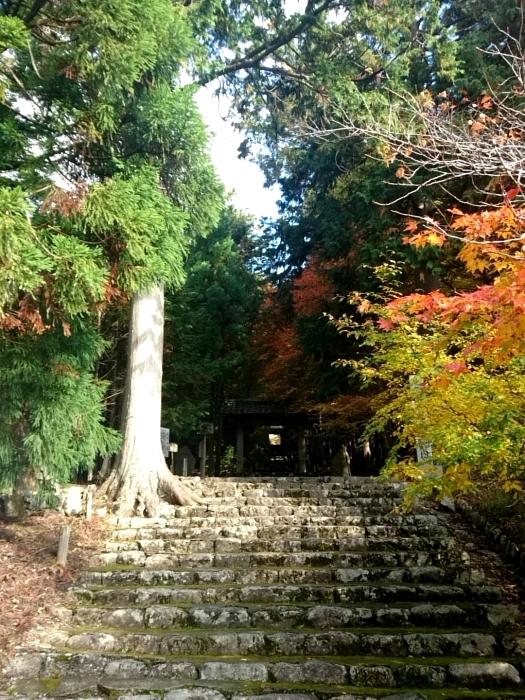 幸せ京都旅 「常照皇寺」 静寂なる禅寺の美しき紅葉_c0362623_15455215.jpg