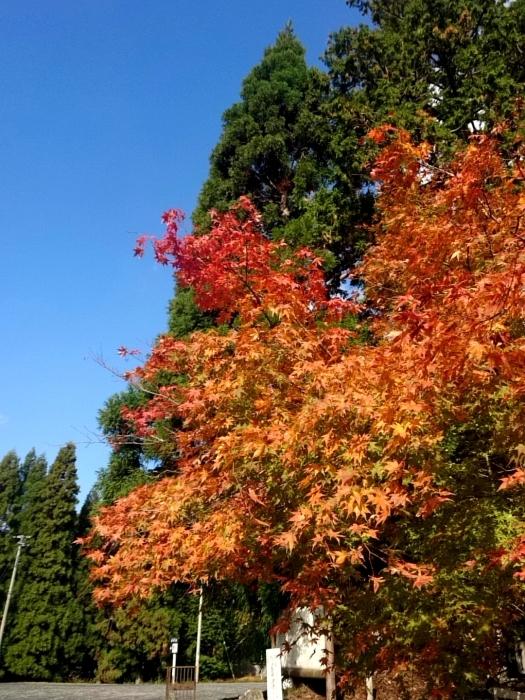 幸せ京都旅 「常照皇寺」 静寂なる禅寺の美しき紅葉_c0362623_15455235.jpg