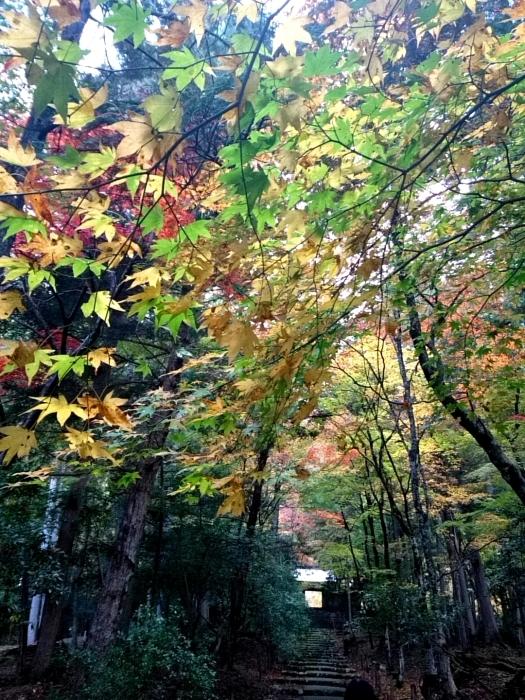 幸せ京都旅 「常照皇寺」 静寂なる禅寺の美しき紅葉_c0362623_15482746.jpg