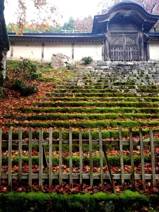 幸せ京都旅 「常照皇寺」 静寂なる禅寺の美しき紅葉_c0362623_15482885.jpg