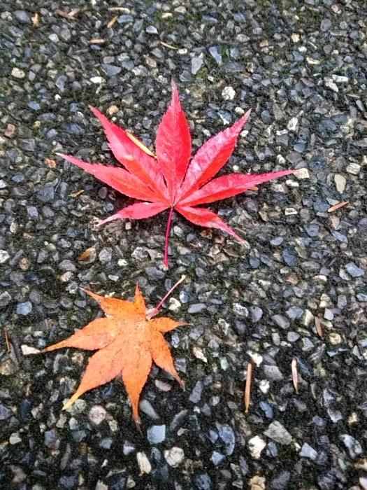 幸せ京都旅 「常照皇寺」 静寂なる禅寺の美しき紅葉_c0362623_15482897.jpg