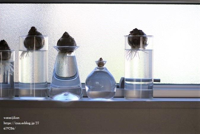 ヒヤシンスの水栽培を始める_e0214646_23020267.jpg