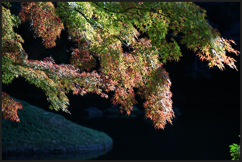 小石川後楽園 -29_b0340572_17394658.jpg
