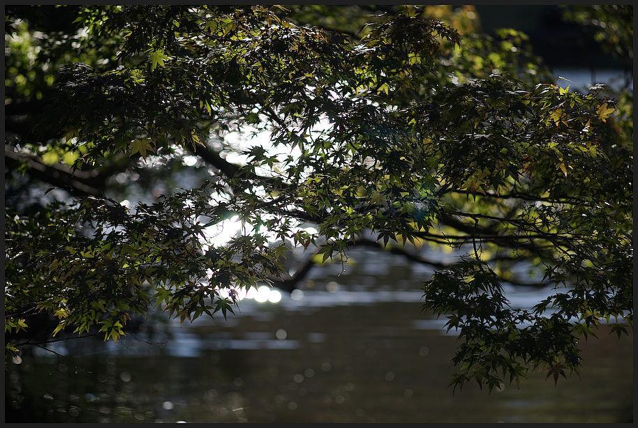 小石川後楽園 -29_b0340572_17395076.jpg
