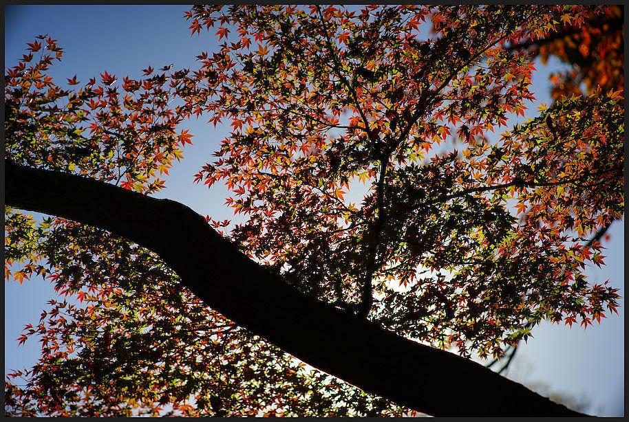 小石川後楽園 -30_b0340572_18064521.jpg