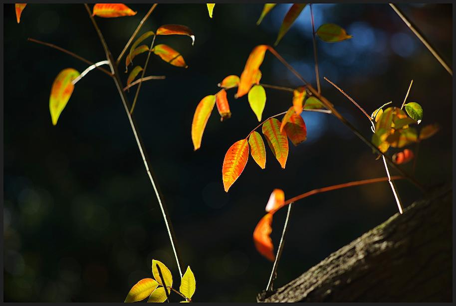 小石川後楽園 -30_b0340572_18065252.jpg