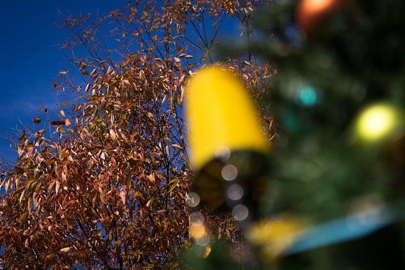 ホリデイシーズンの星の丘_d0353489_20411974.jpg