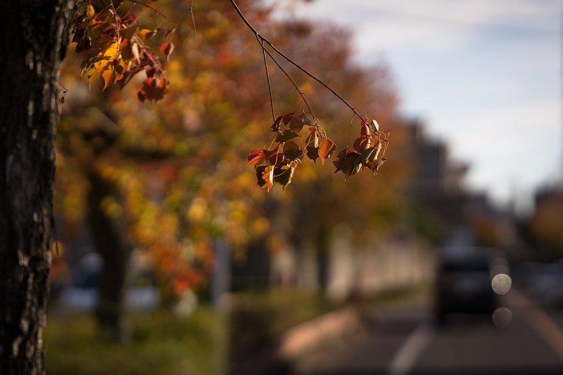 冬陽を透過する葉たち_d0353489_21400705.jpg