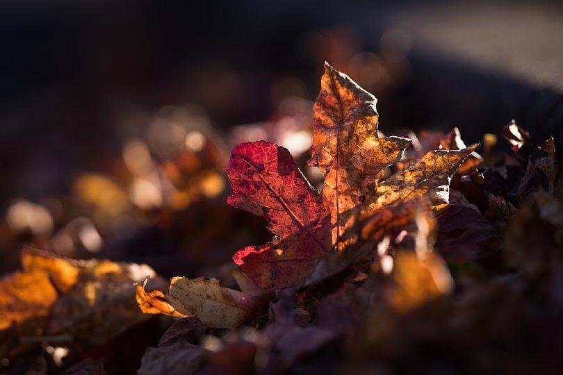 冬陽を透過する葉たち_d0353489_21403702.jpg