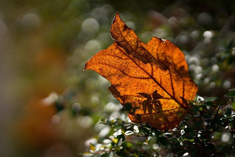 冬陽を透過する葉たち_d0353489_21410700.jpg