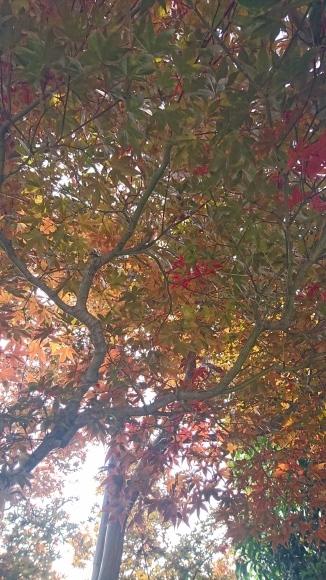だいぶ季節が進みました。_c0066693_16550706.jpg