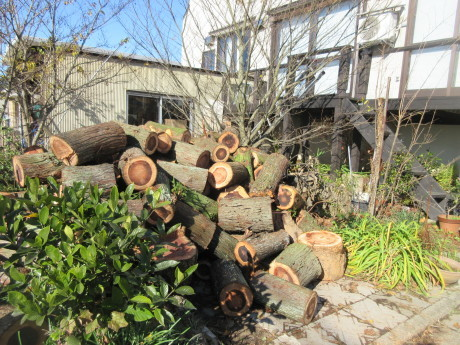 薪到来・木の冬囲い_a0203003_20060501.jpg