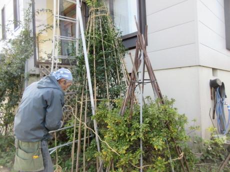 薪到来・木の冬囲い_a0203003_20064835.jpg