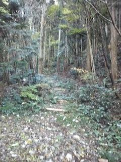 高木山探検とクライミング_c0359615_19395035.jpg