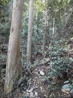 高木山探検とクライミング_c0359615_19400131.jpg