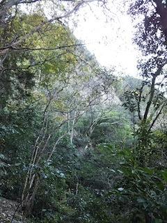 高木山探検とクライミング_c0359615_19404023.jpg