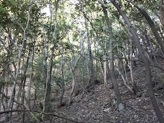 高木山探検とクライミング_c0359615_19405135.jpg