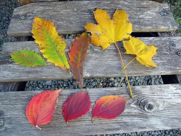 落ち葉の舞い散る・・・_f0129726_20470529.jpg