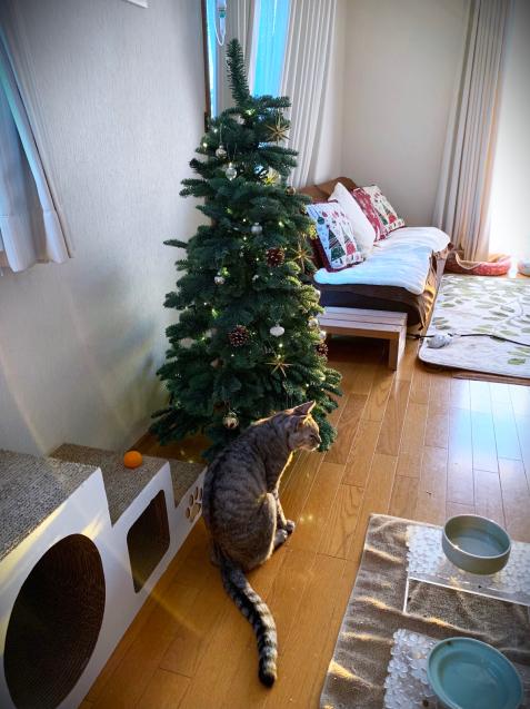 クリスマスツリーを出したよ_d0355333_21174054.jpg