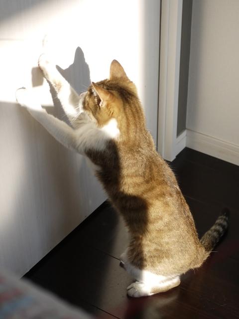 猫のお留守番 ウィンクくん編。_a0143140_23171984.jpg