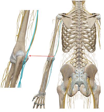 肘が痛むときには◯臓、膝が痛むときには◯臓を整えましょう 〜ある日の施術より〜_e0073240_06401652.jpg