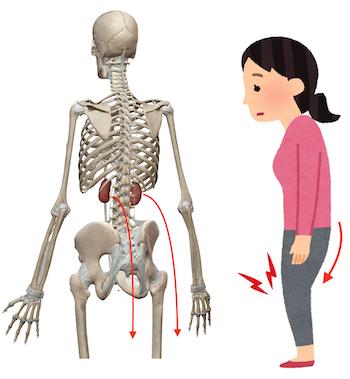 肘が痛むときには◯臓、膝が痛むときには◯臓を整えましょう 〜ある日の施術より〜_e0073240_07125452.jpg