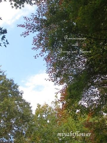 花から実へ 藪柑子 杜鵑のその後_b0255144_16304378.jpg