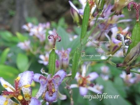 花から実へ 藪柑子 杜鵑のその後_b0255144_16324917.jpg