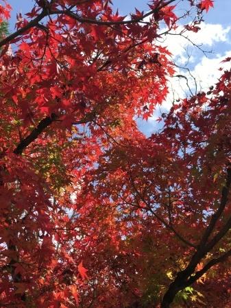 秋の京都へ_b0341759_00284297.jpg