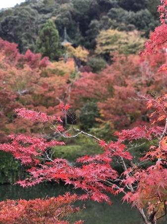 秋の京都へ_b0341759_00314446.jpg